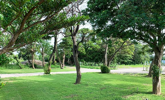 木もれ陽Cサイト(グループ、ペット不可)